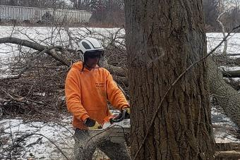 Arborist clearing trees with a chainsaw.
