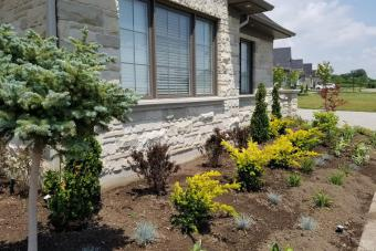 Professionally landscaped shrub garden in front of home.